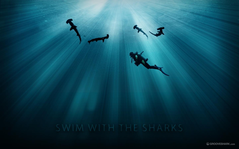 плавание с акулами, фото, обои для рабочего стола, скачать