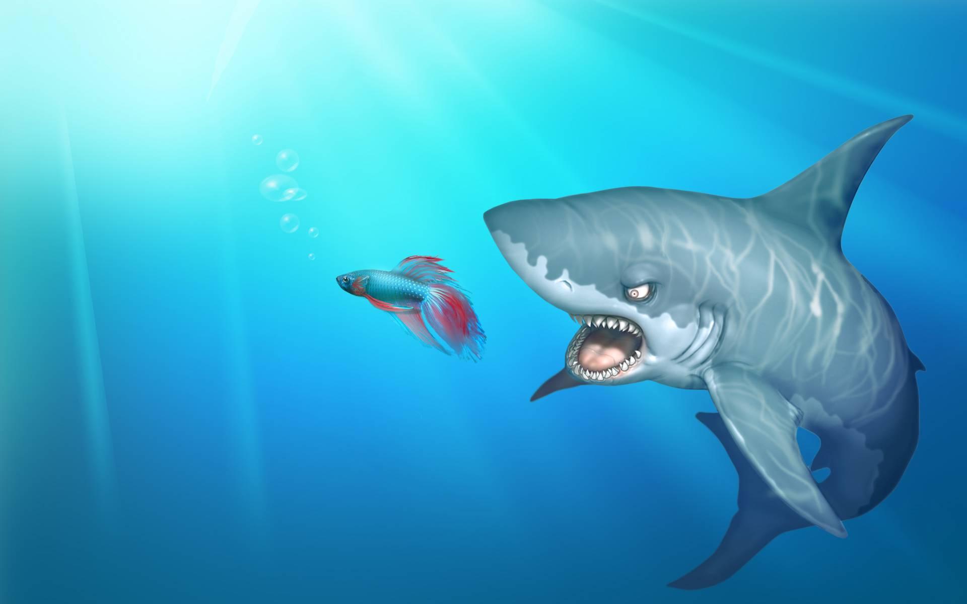 акула ест рыбку, фото, обои для рабочего стола