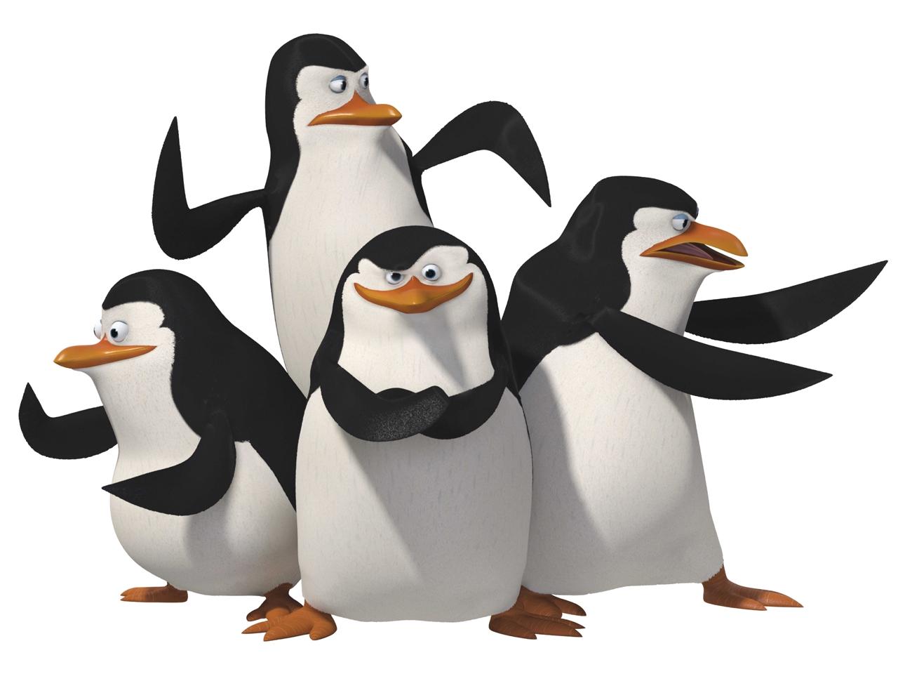 мадагаскарские пингвины, фото, скачать обои для рабочего стола