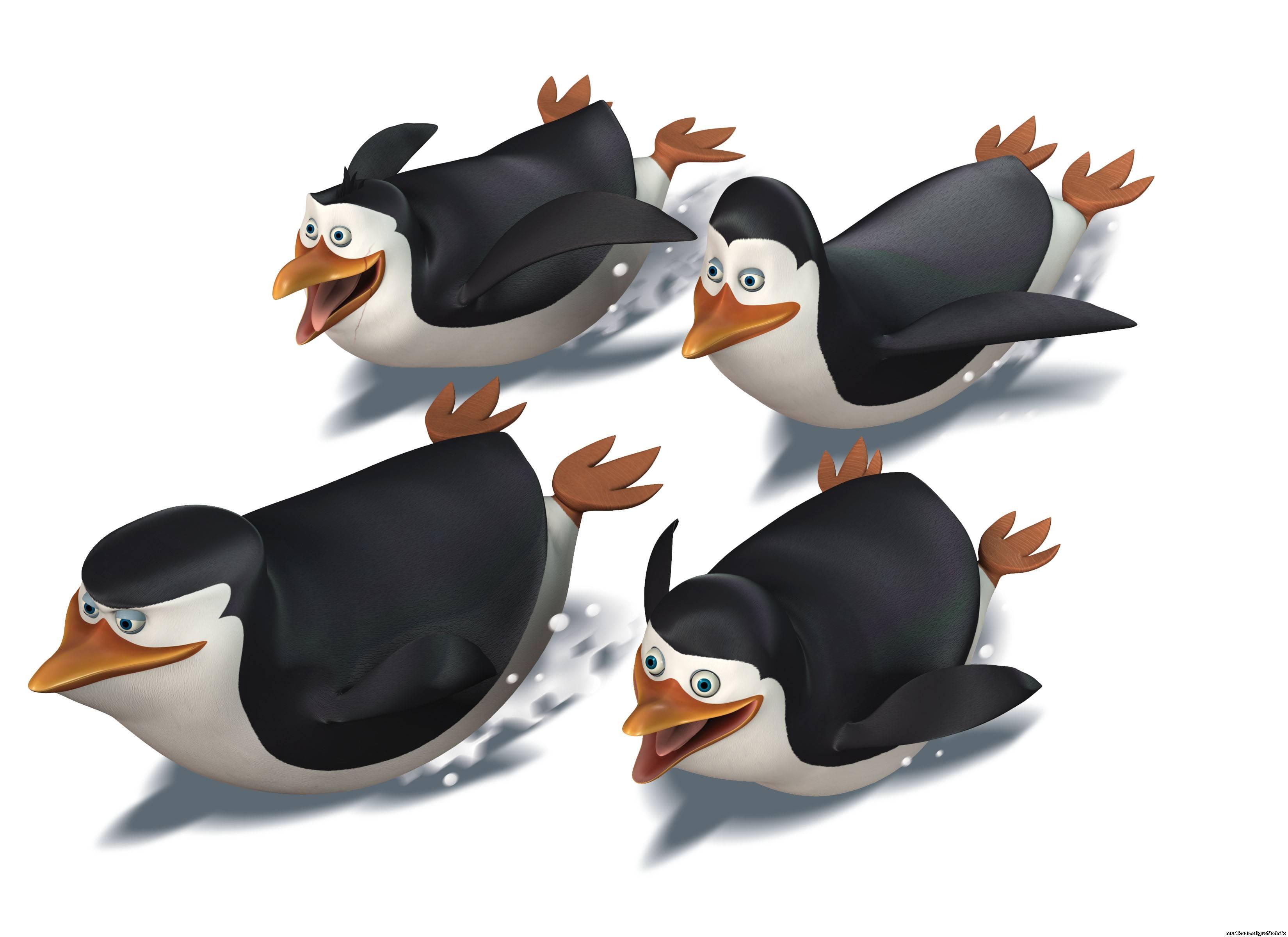пингвины из Мадагаскара, скачать фото, обои на рабочий стол