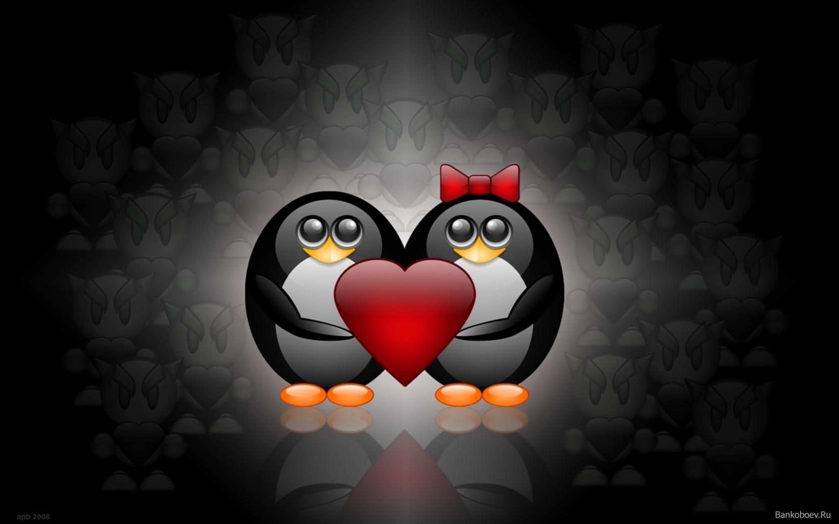 пара влюбленных пингвинов, скачать фото, обои для рабочего стола