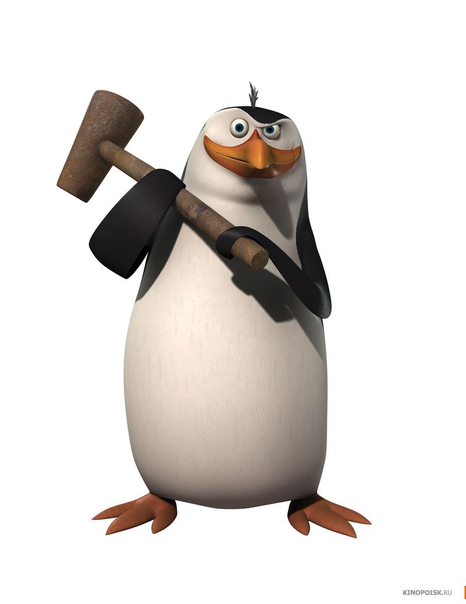пингвин из Мадагаскара, фото, обои для рабочего стола, фото, молоток