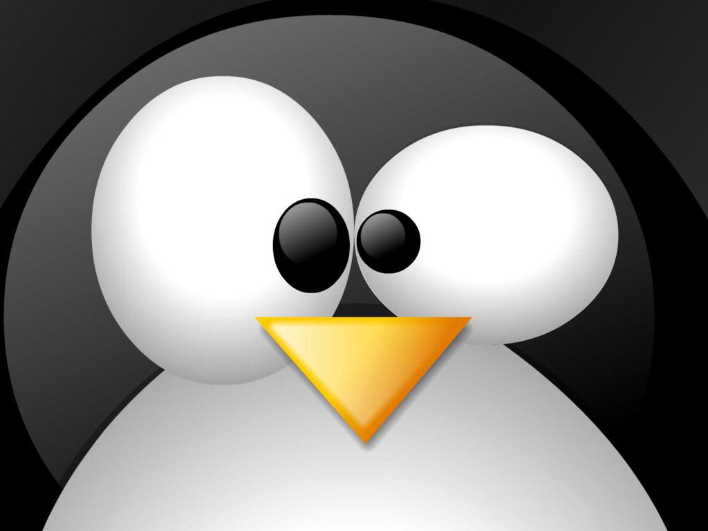Пингвин, морда, обои для рабочего стола, прикольное фото, скачать