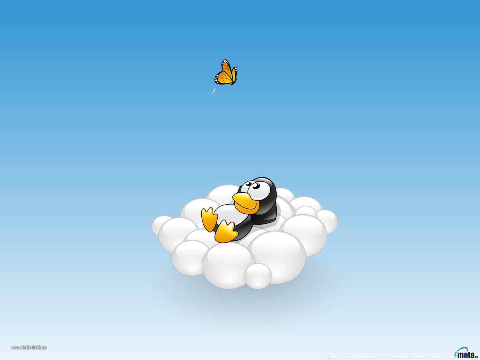 небо и облако, пингвин, обои для рабочего стола