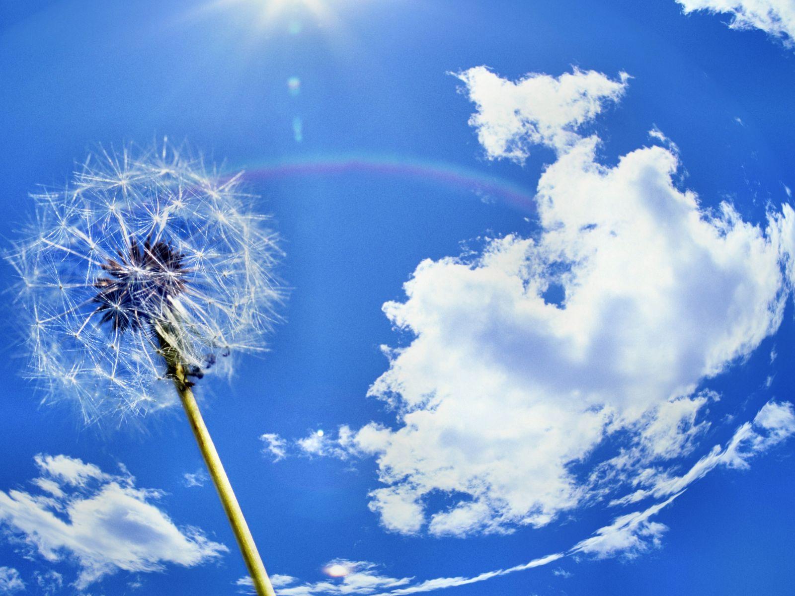 одуванчик, небо, облака, скачать фото, обои для рабочего стола, скачать