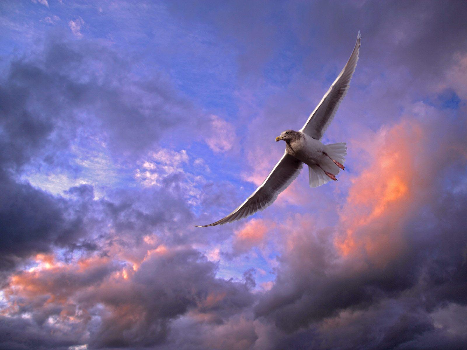 сокол, небо, облака, скачать фото, обои для рабочего стола