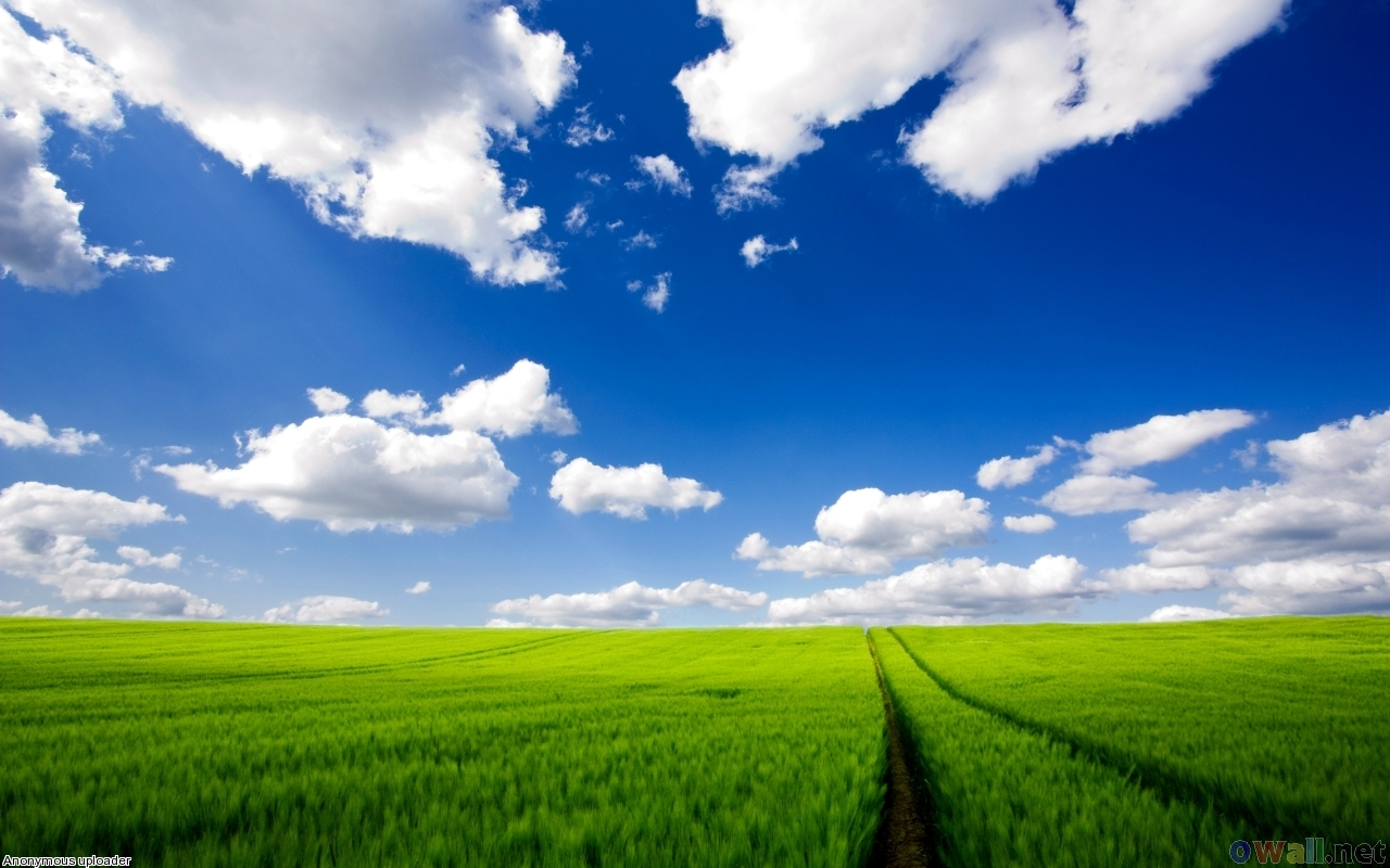 трава, газон, фото, обои для рабочего стола, скачать, sky wallpaper