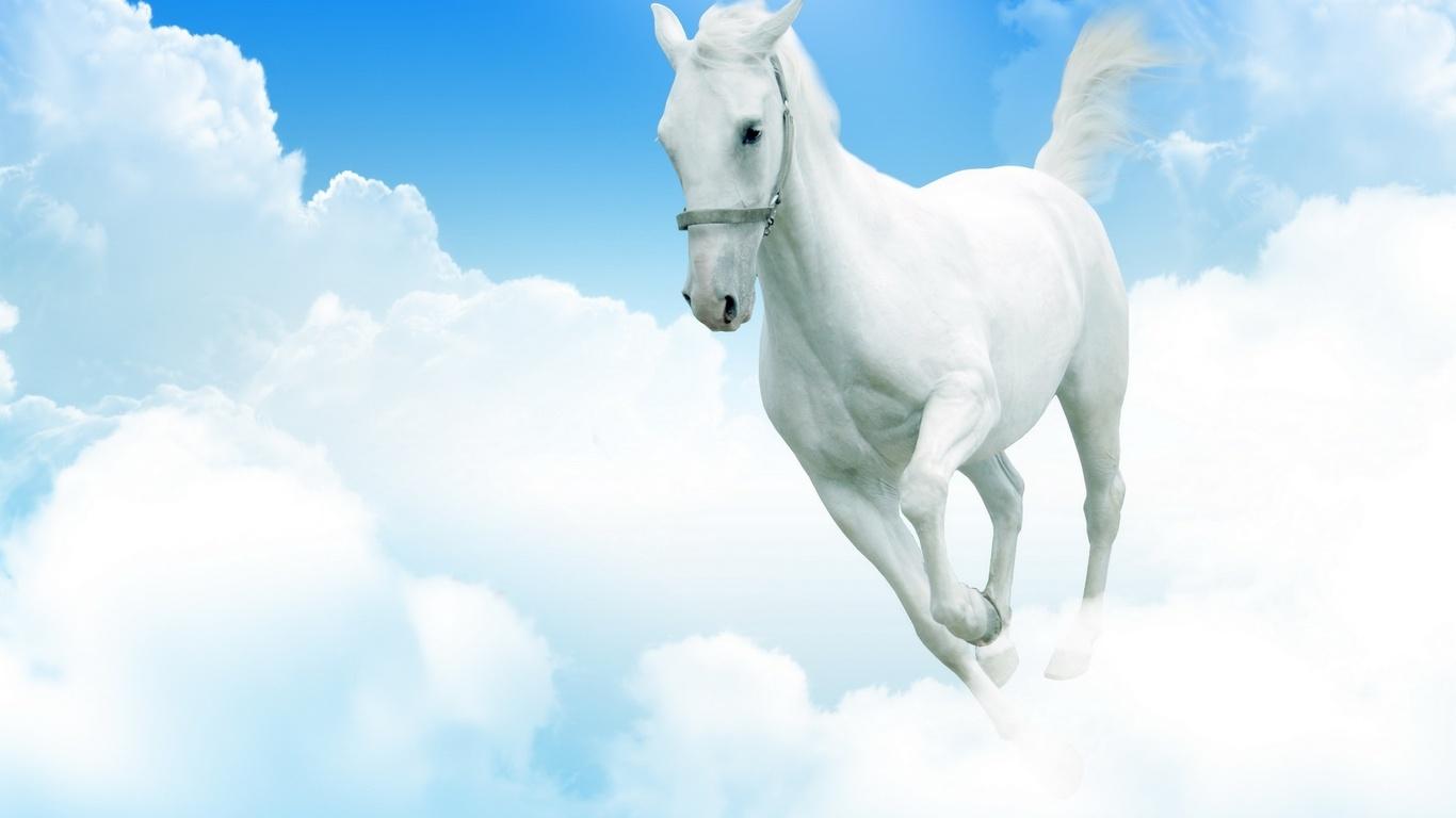 Белый конь, лоашдь бежит по облакам, фото, обои для рабочего стола