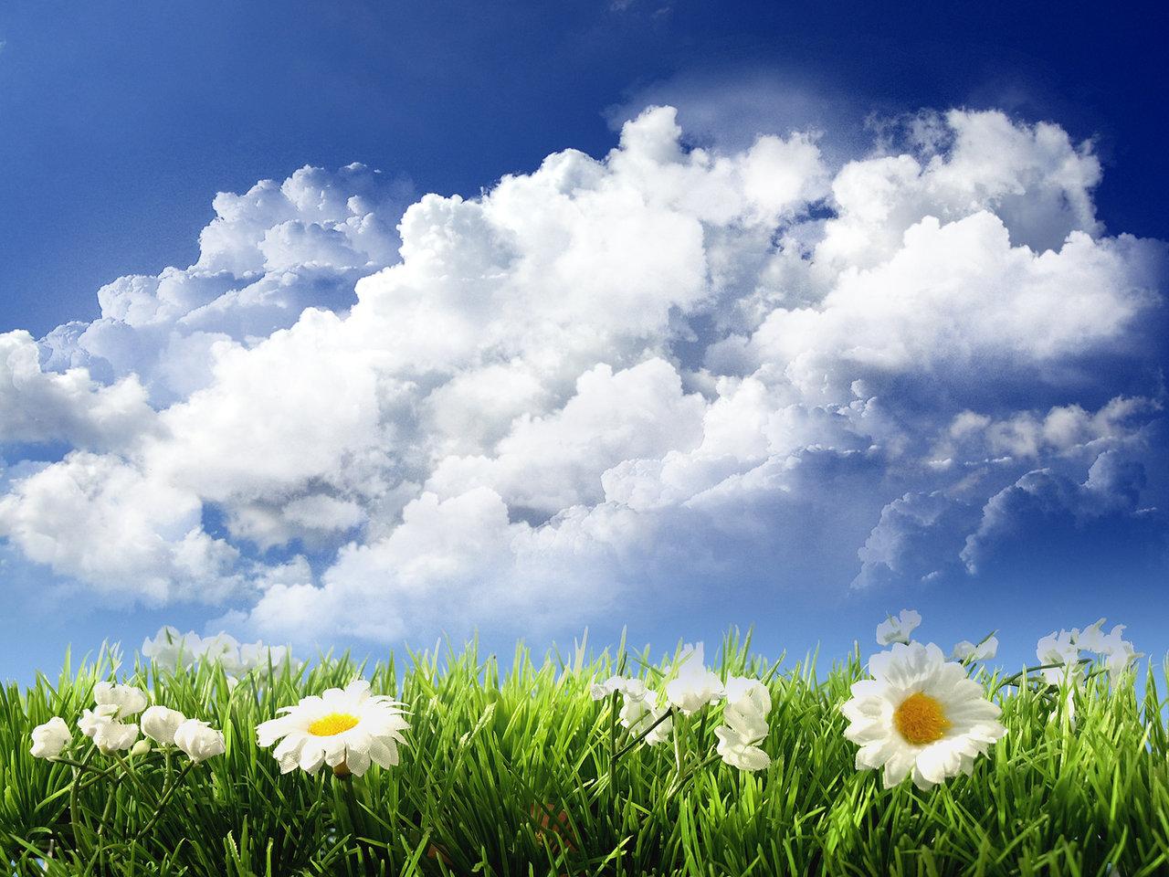 поле с цветами и синее небо, обои для рабочего стола, облака, скачать