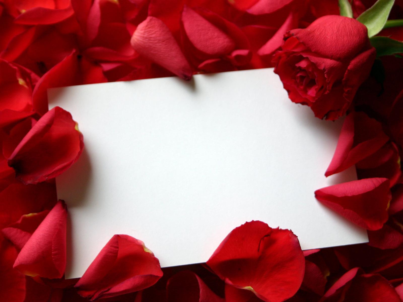 Белый лист бумаги в розах, скачать фото, обои на рабочий стол, розы