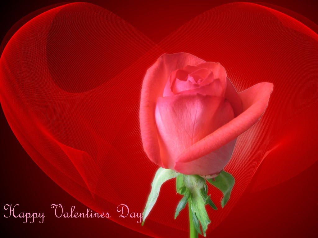 роза на фоне сердца, скачать фото, обои для рабочего стола, heart wallpaper