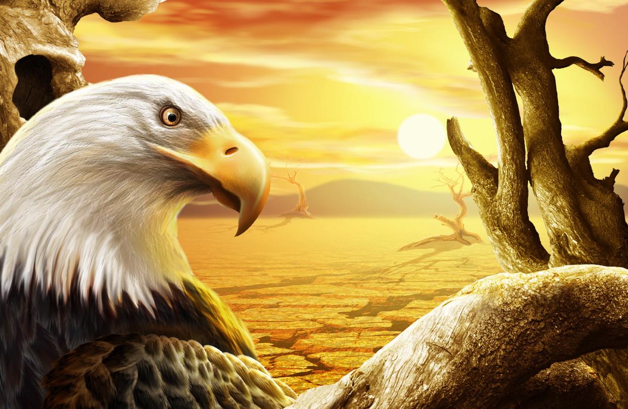 рисунок, красивое фото, орел, беркут, закат