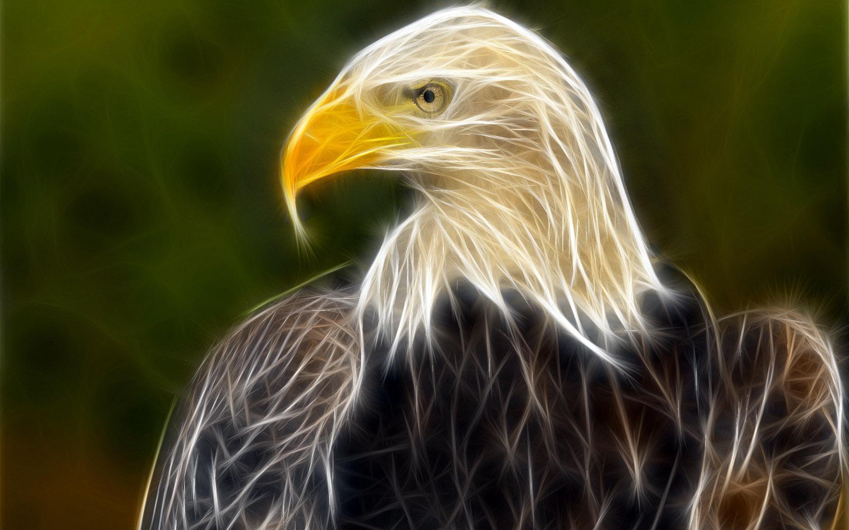 орел, фото, обои для рабочего стола