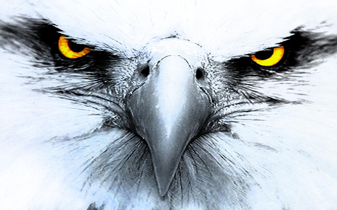 взгляд хищной птицы, орел, фото, обои на рабочий стол