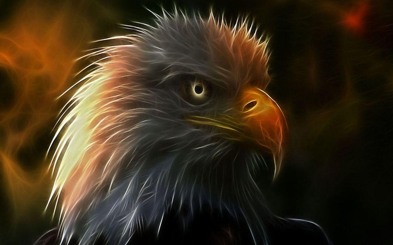 орел, хищник, фото, обои на рабочий стол