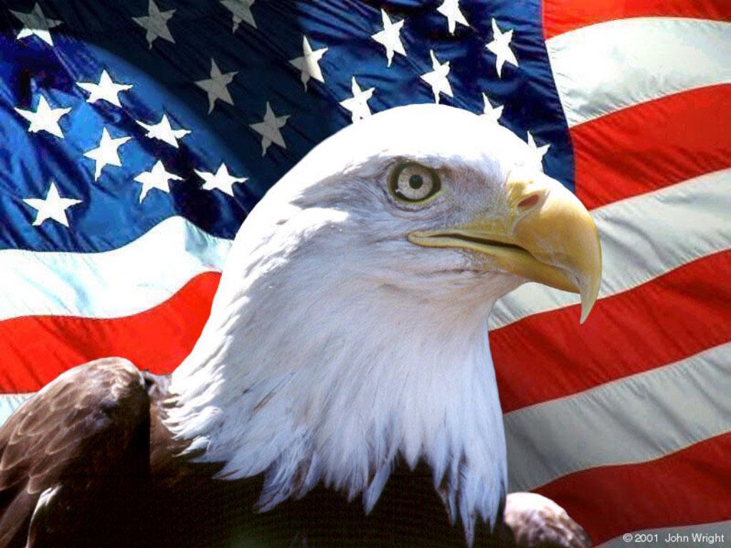 орел на фоне американского флага, фото, обои для рабочего стола