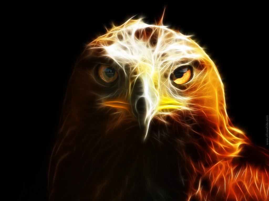 орел, хищник, скачать фото, обои для рабочего стола