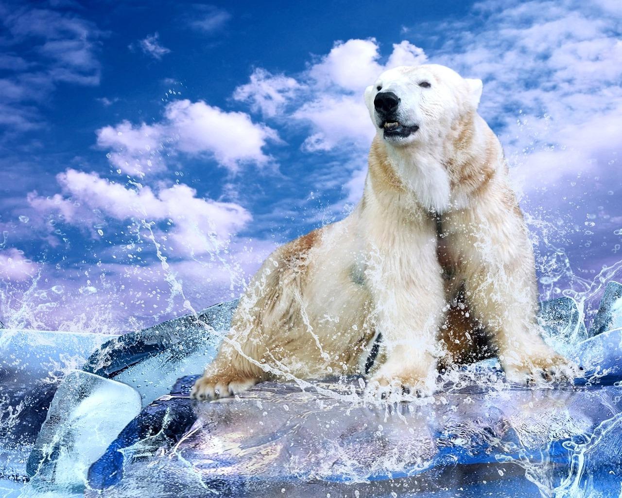 white polar bear, скачать фото, обои на рабочий стол