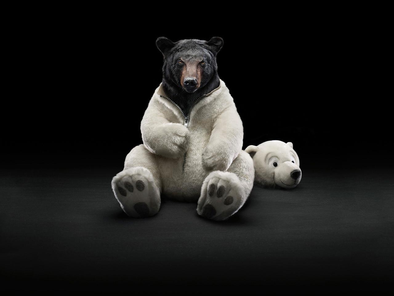 черный, белый медведь, фото, обои для рабочего стола, костюм белого медведя