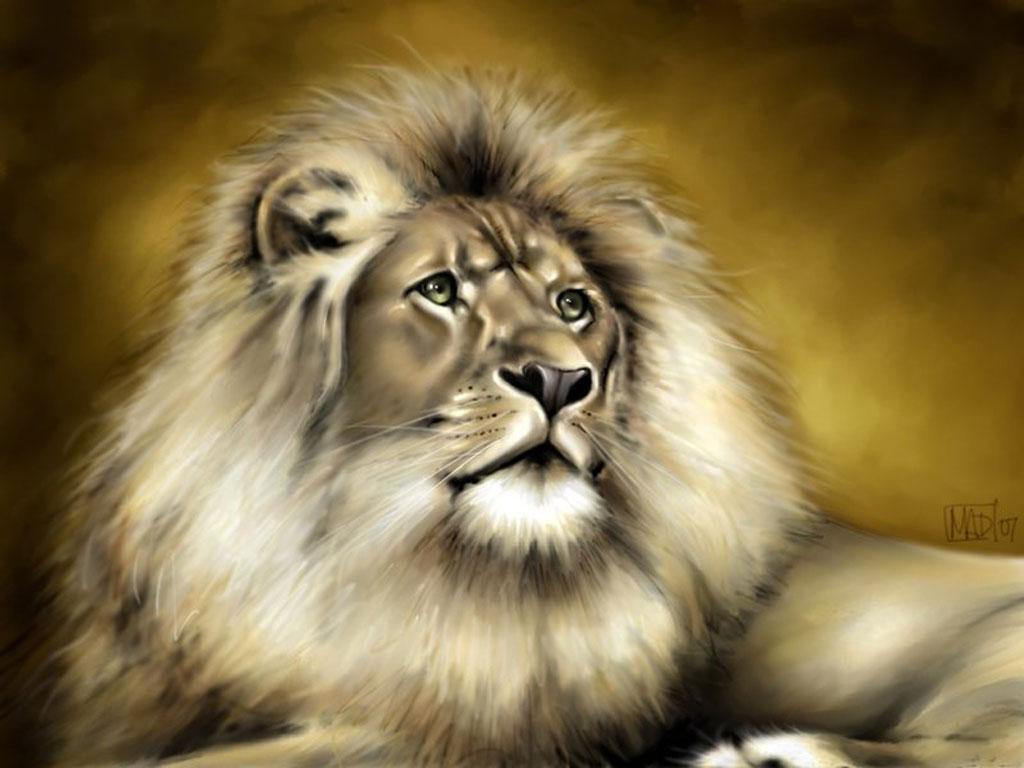 седой, большой лев, вожак, скачать рисунок, фото льва