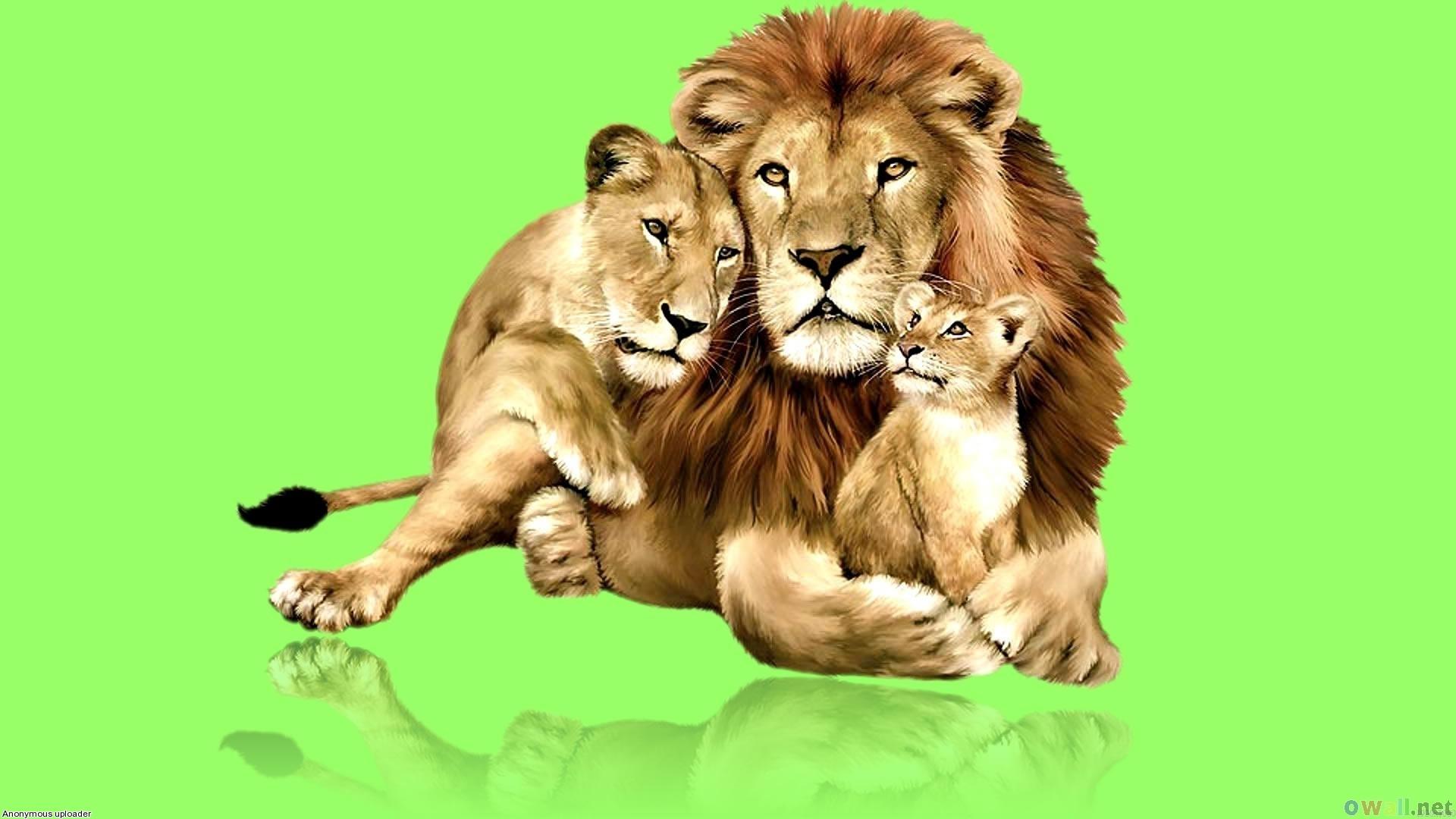 львы, фото, семья львов, скачать обои для рабочего стола