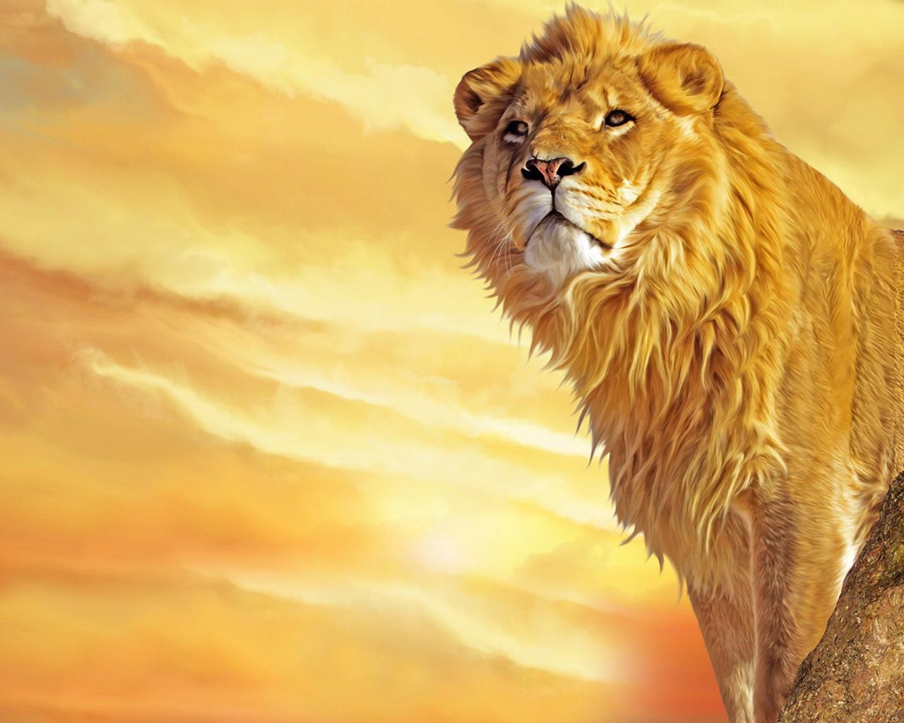 закат, фото, рисунок, лев стоит, фото львов