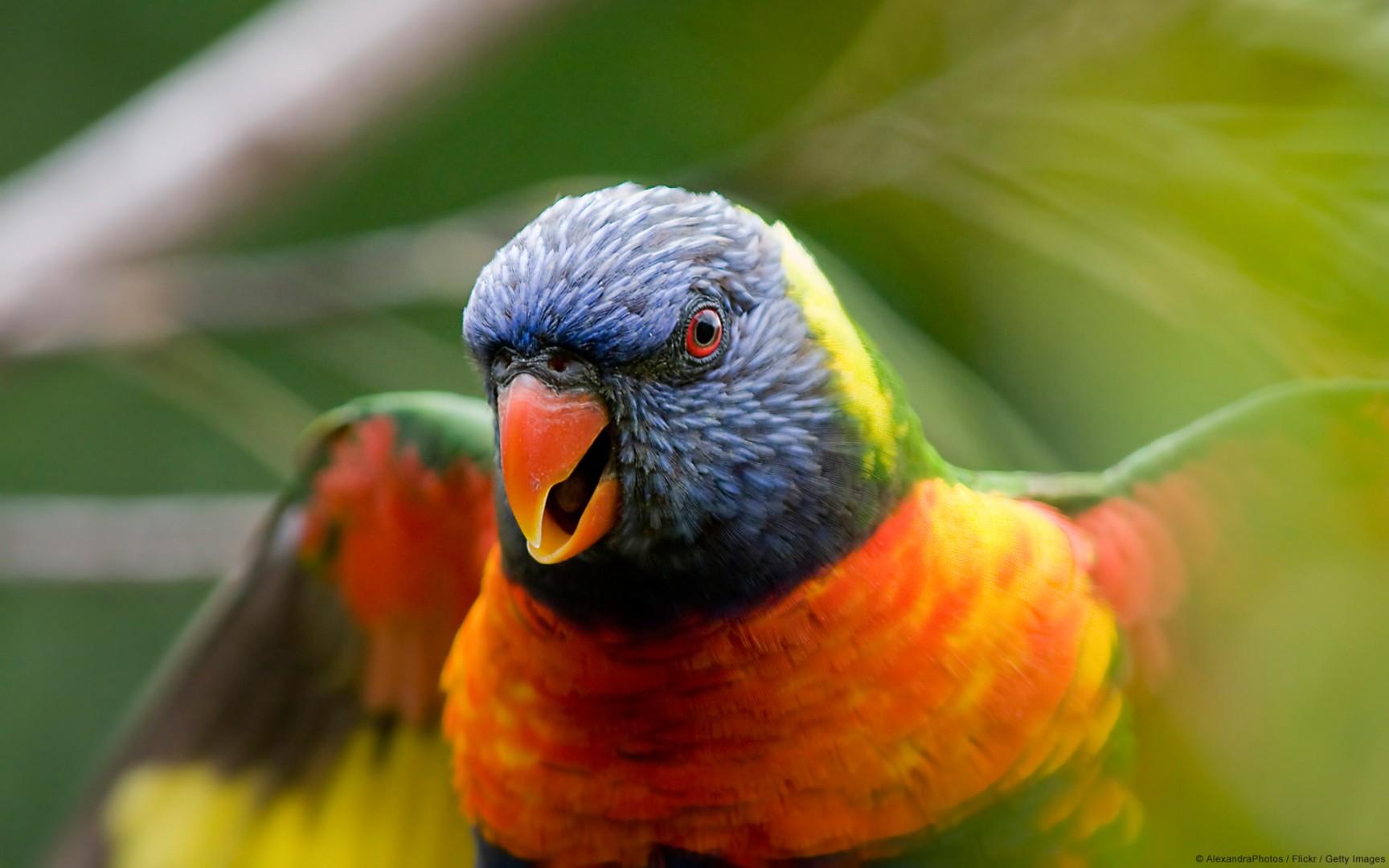 попугай, скачать фото, обои для рабочего стола, цветной