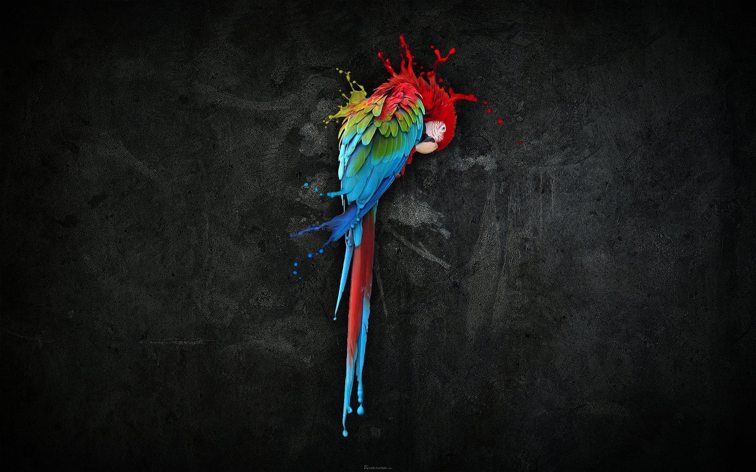 parrot wallpaper, скачать обои для рабочего стола, попугай