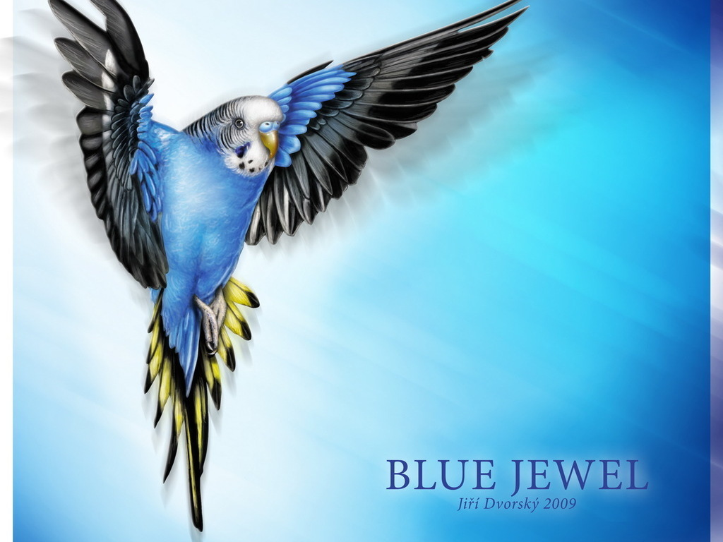 blue wallpaper, скачать обои для рабочего стола, голубой попугай