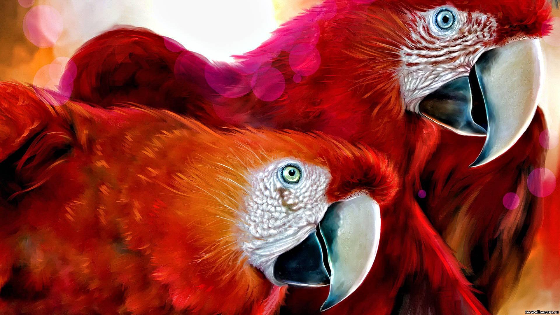 пара красных, красивых попугаев, скачать фото, обои для рабочего стола