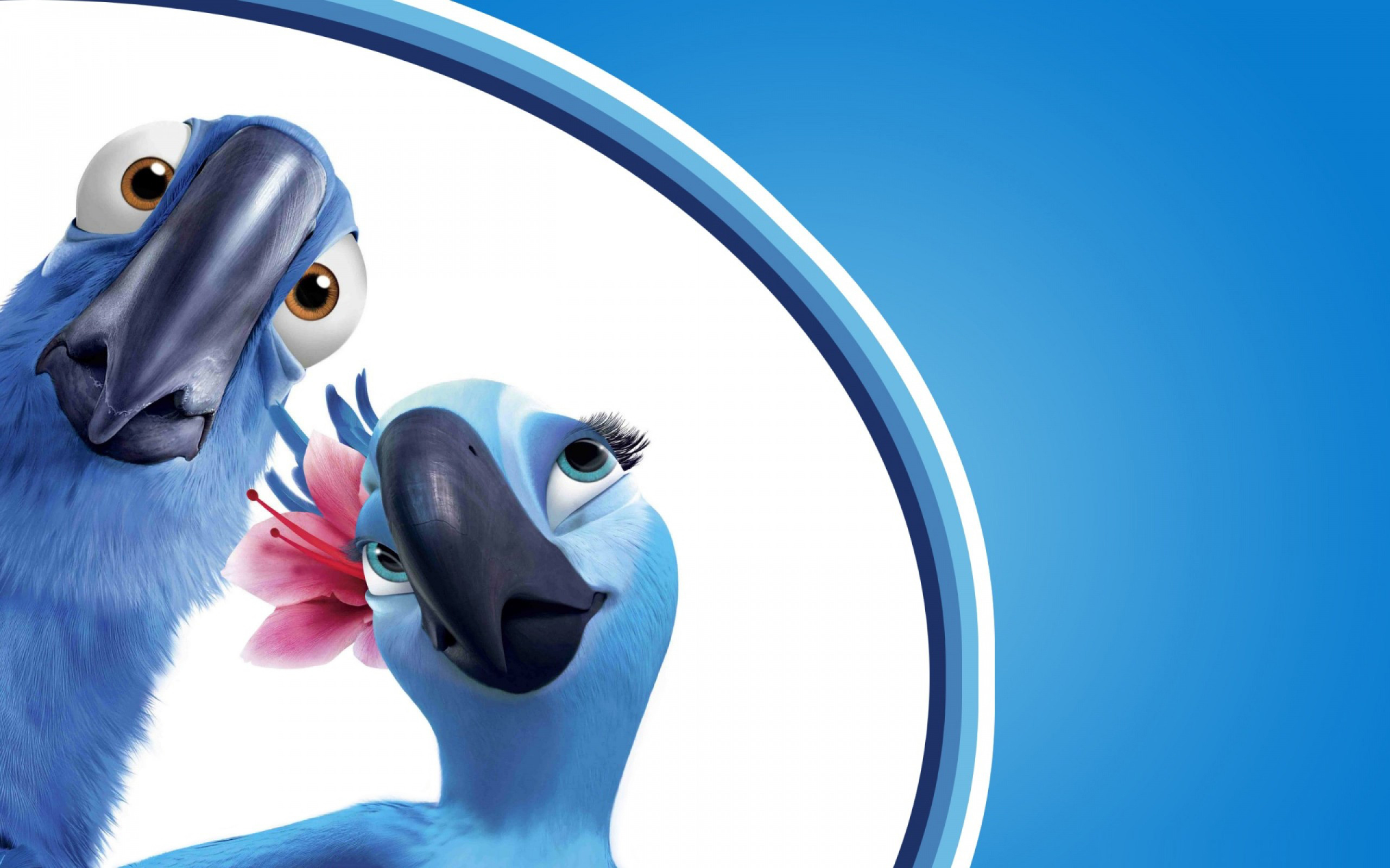 влюбленная парочка синих попугаев, скачать фото, обои для рабочего стола
