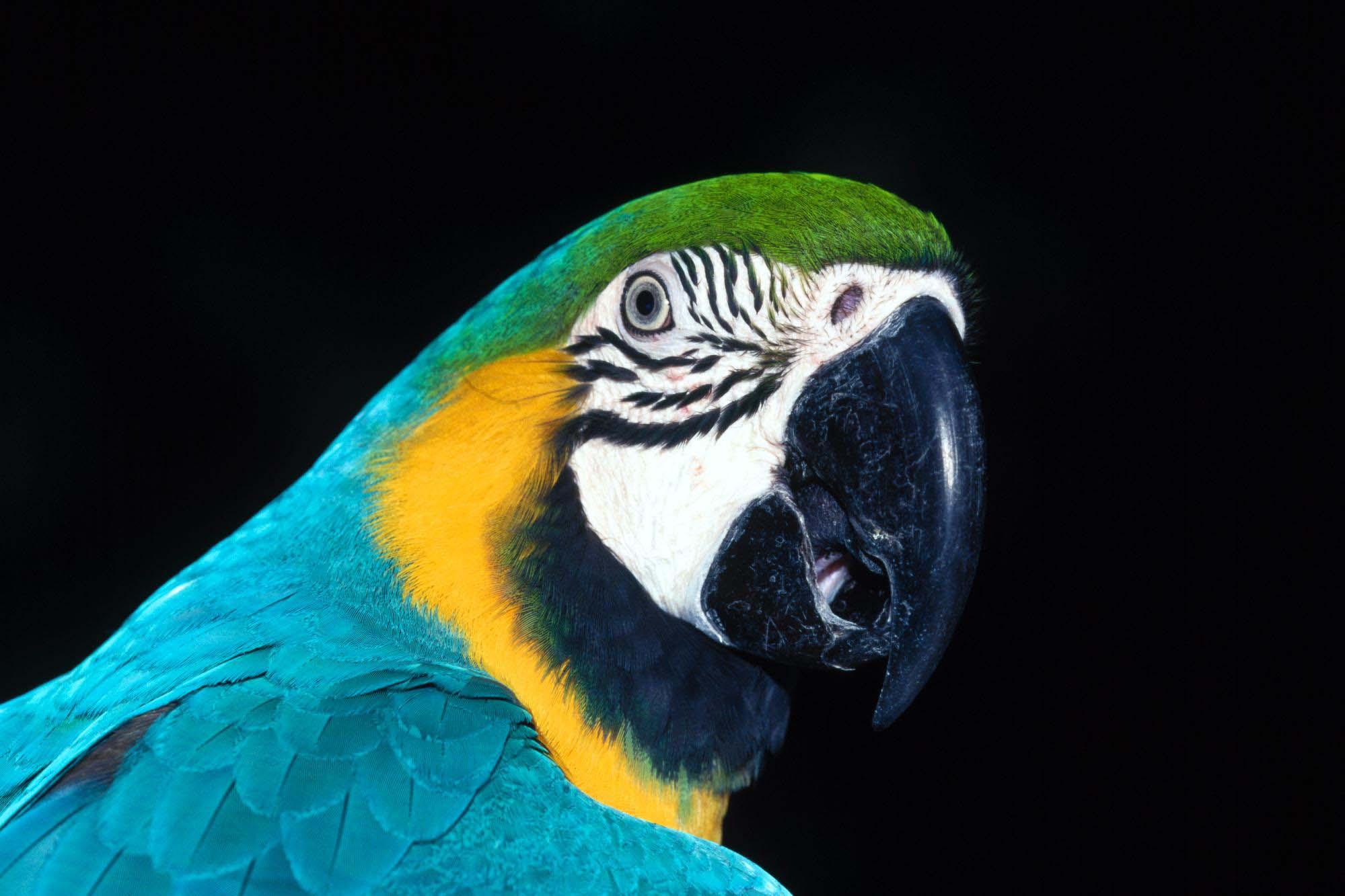 красивый, сине-зеленый попугай, скачать фото, обои для рабочего стола