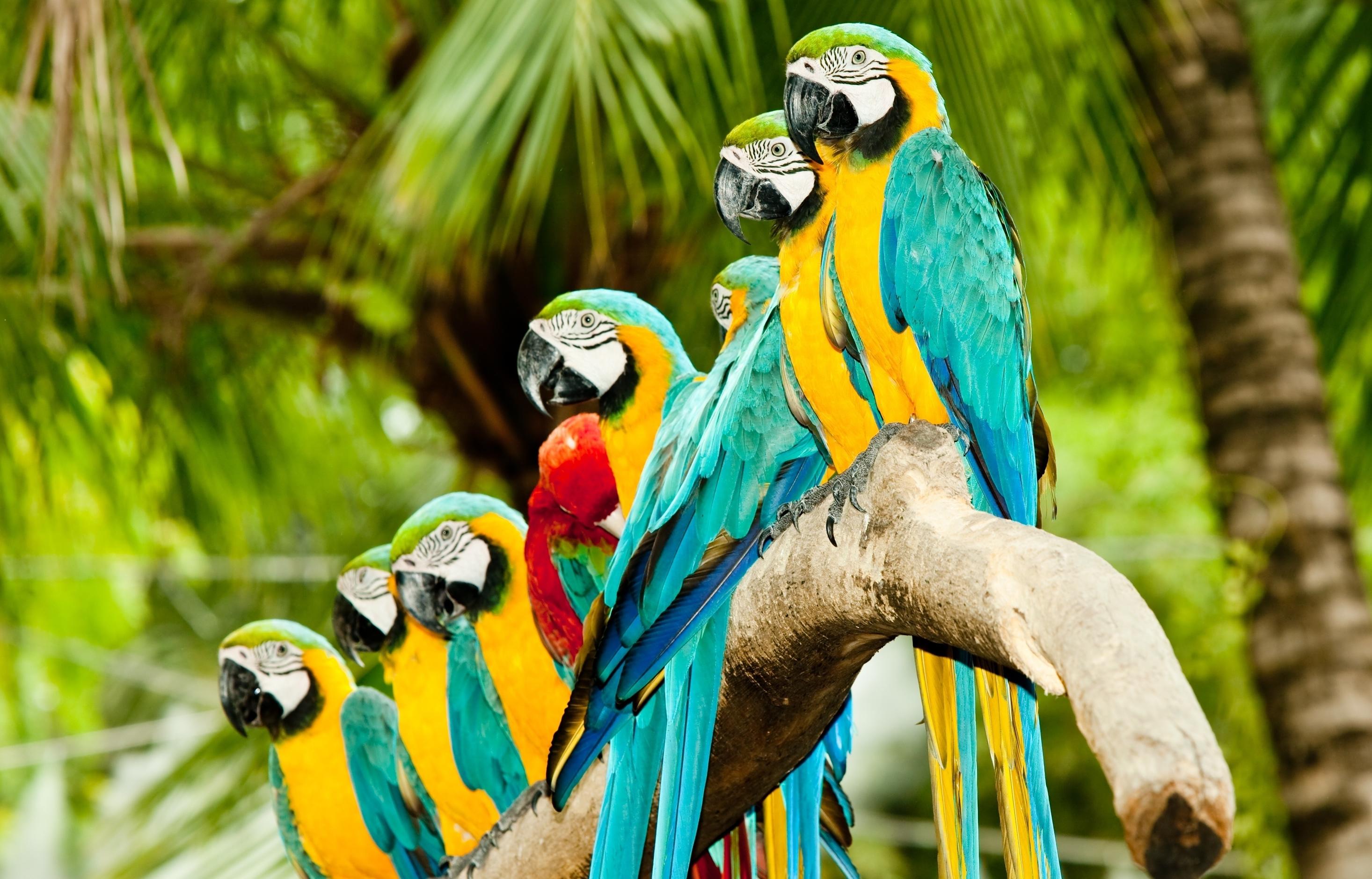 много красивых попугаев сидят вместе, скачать фото, обои для рабочего стола