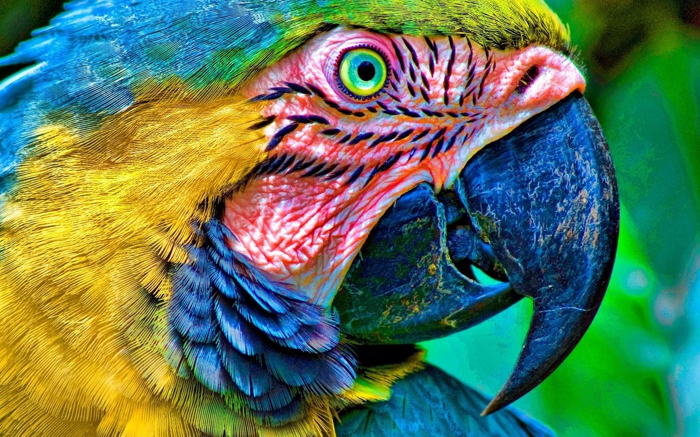 голова и клюв красивого попугая, скачать фото, обои для рабочего стола