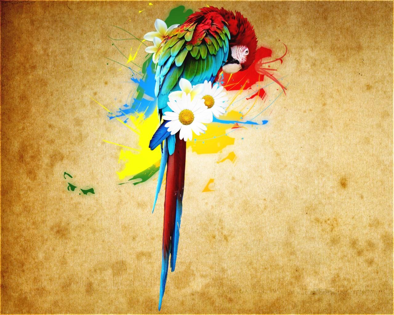 обои для рабочего стола, попугай, скачать фото, wallpaper, parrot