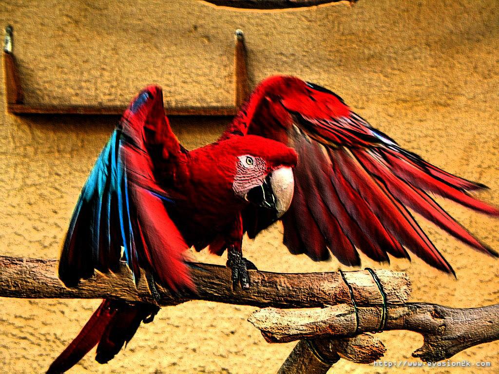 red parrot, красный попугай сидит на ветке, скачать фото, обои для рабочего стола