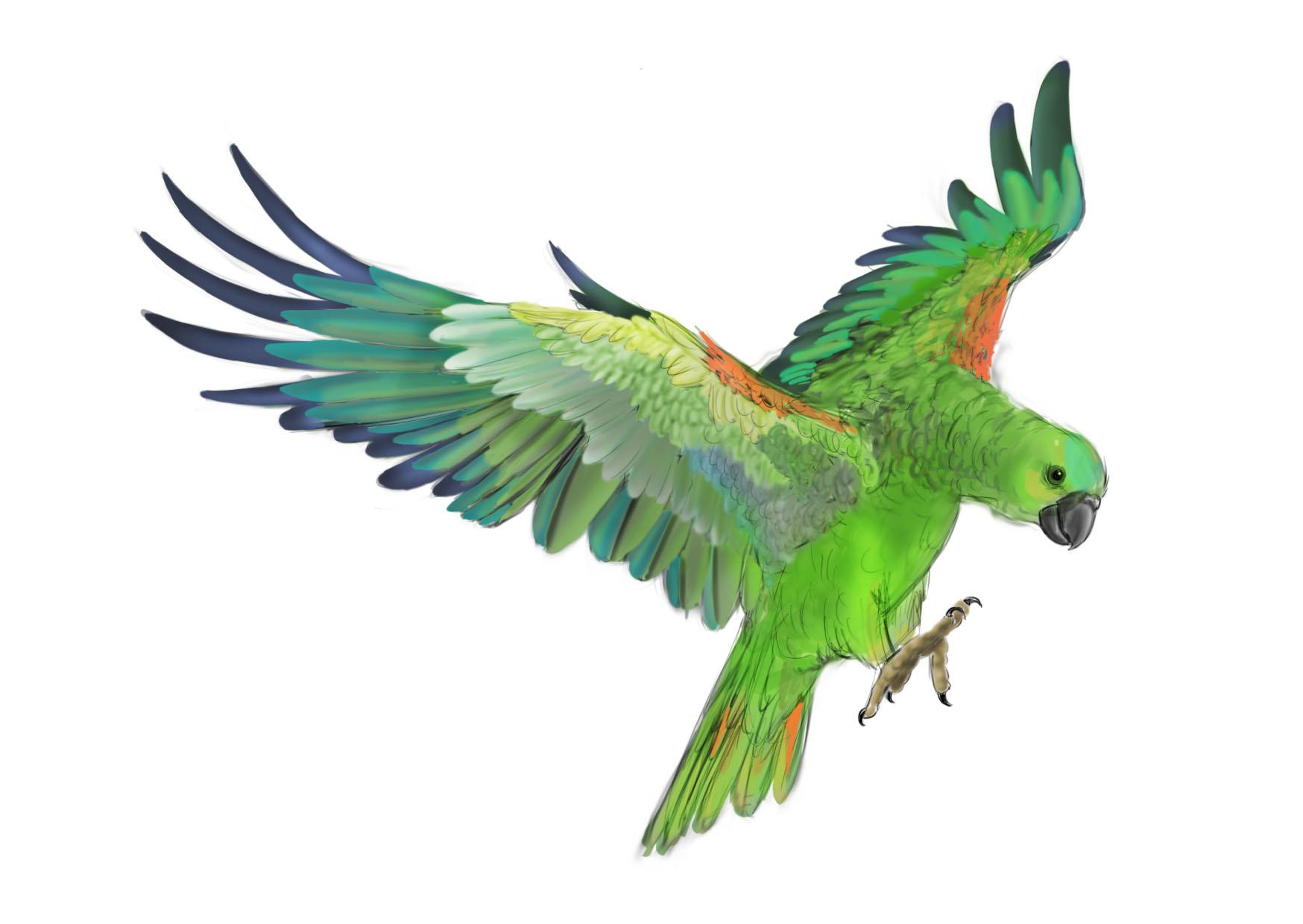 клипарт, зеленый попугай, скачать фото, обои для рабочего стола