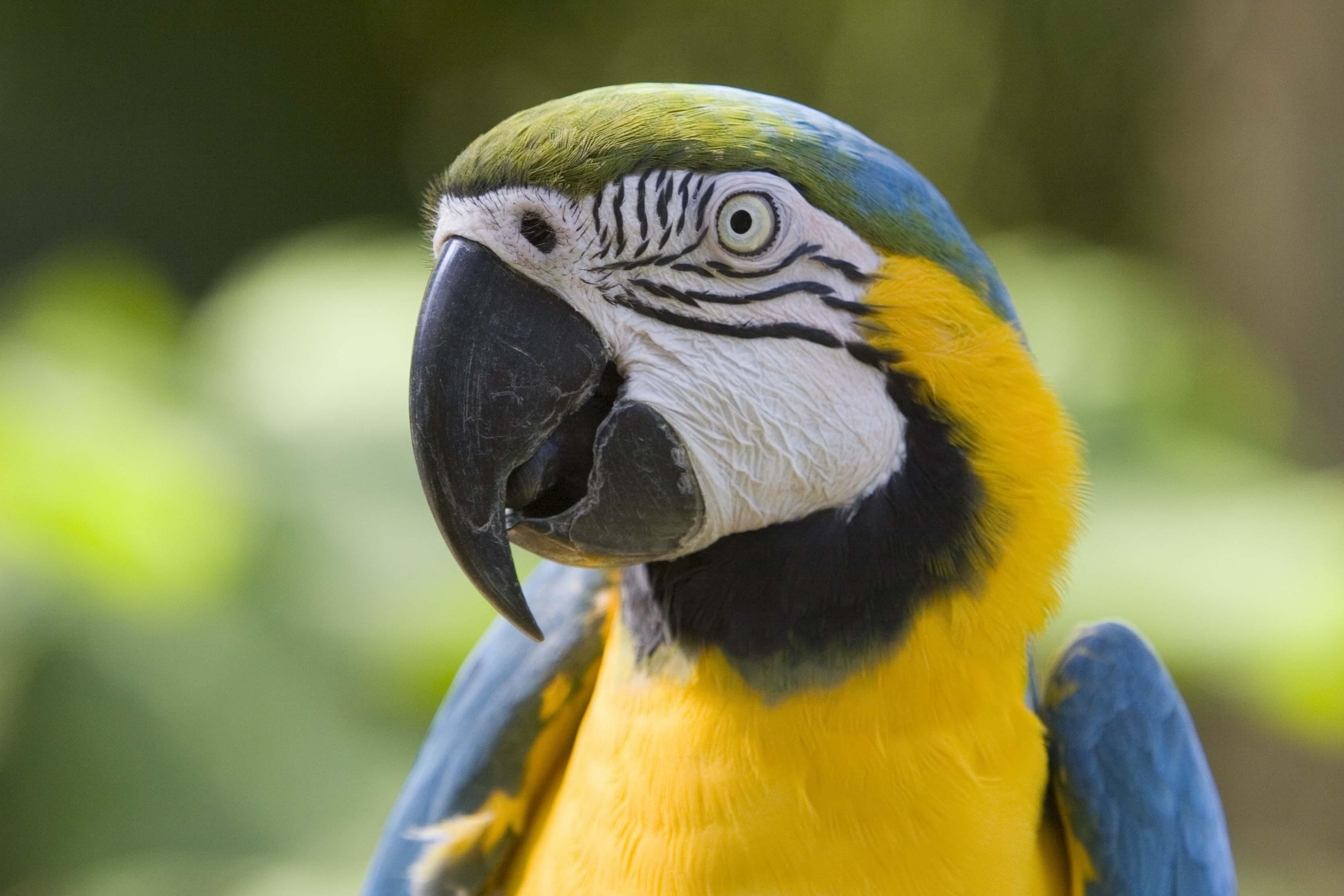 разноцветный попугай, скачать фото