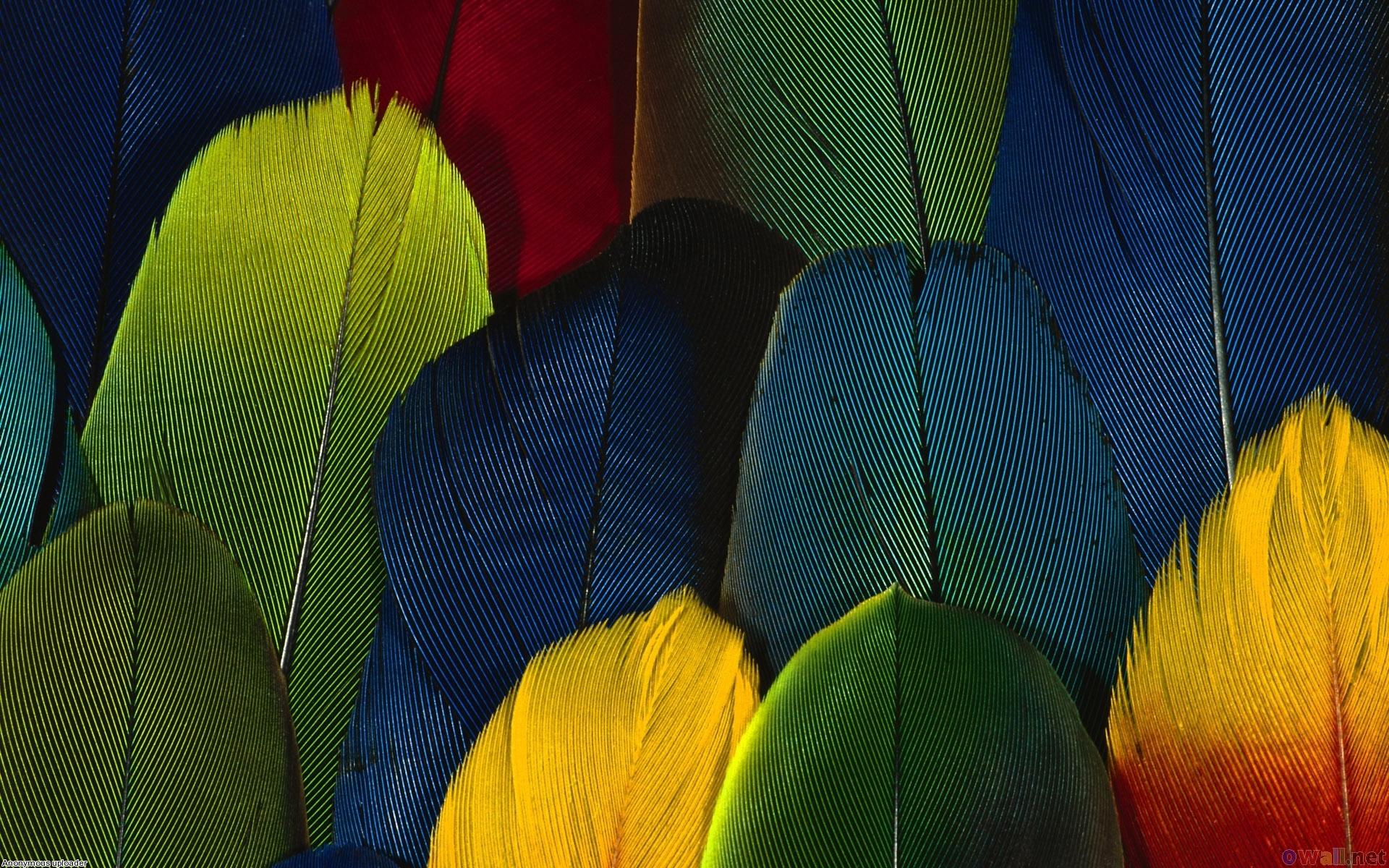 разноцветные перья попугая, скачать фото, обои для рабочего стола