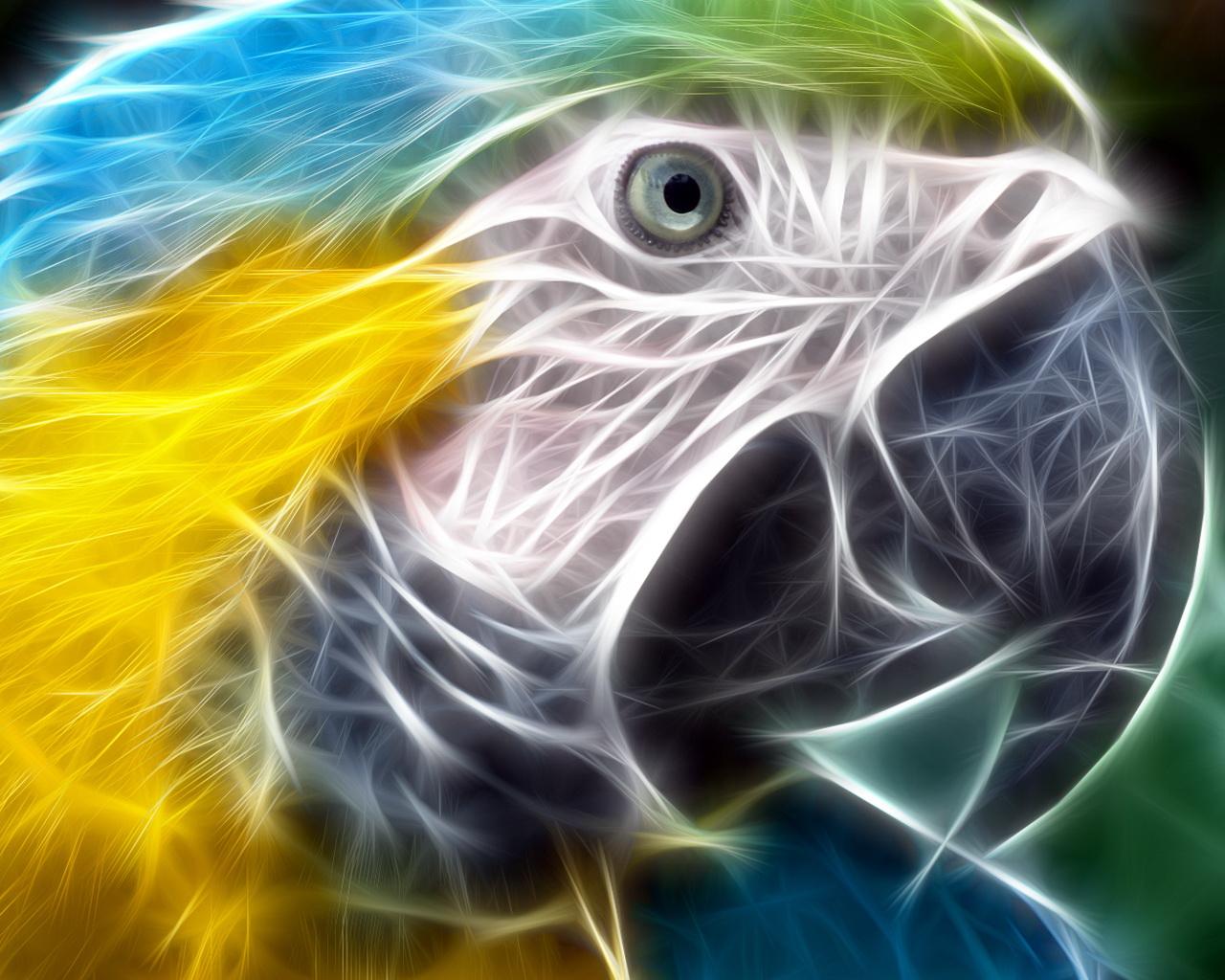 обои для рабочего стола, попугай, parrot wallpaper