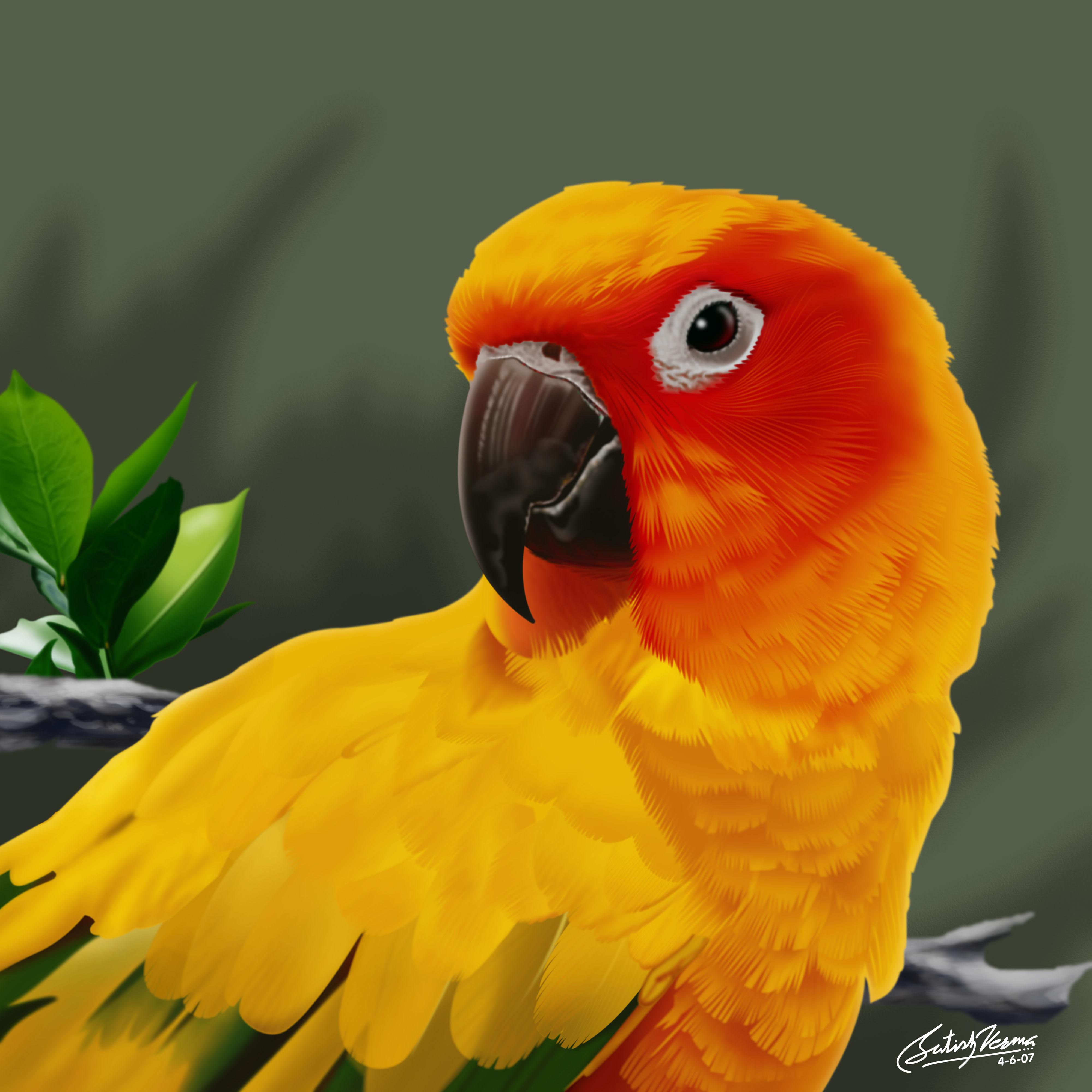 ornage parrot, скачать обои на рабочий стол, оранжевый попугай