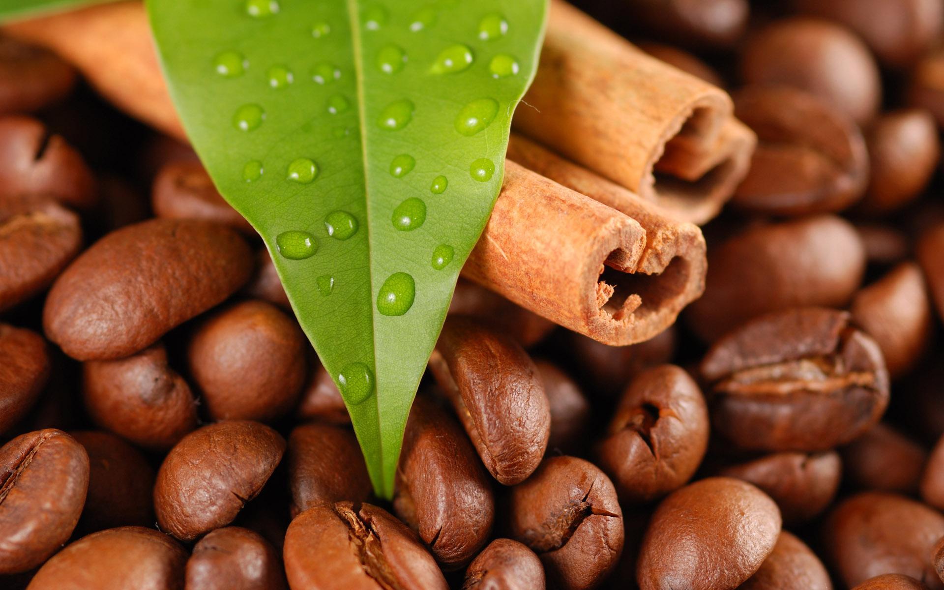 кофейные зерна, шоколад и лист дерева, скачать фото, обои на рабочий стол