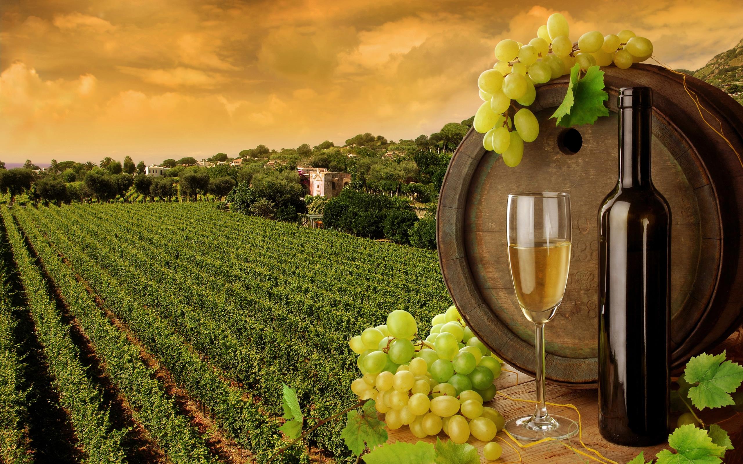поле, бочка вина, пейзаж, вино, виноград, скачать фото