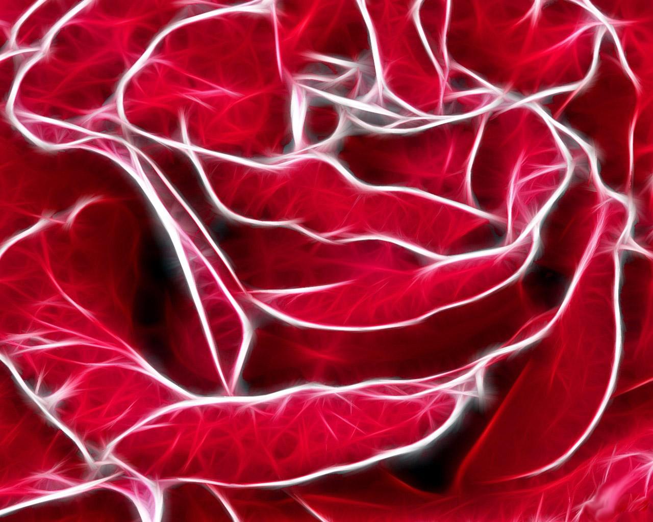 красная роза, фото крупным планом, скачтаь обои для рабочего стола
