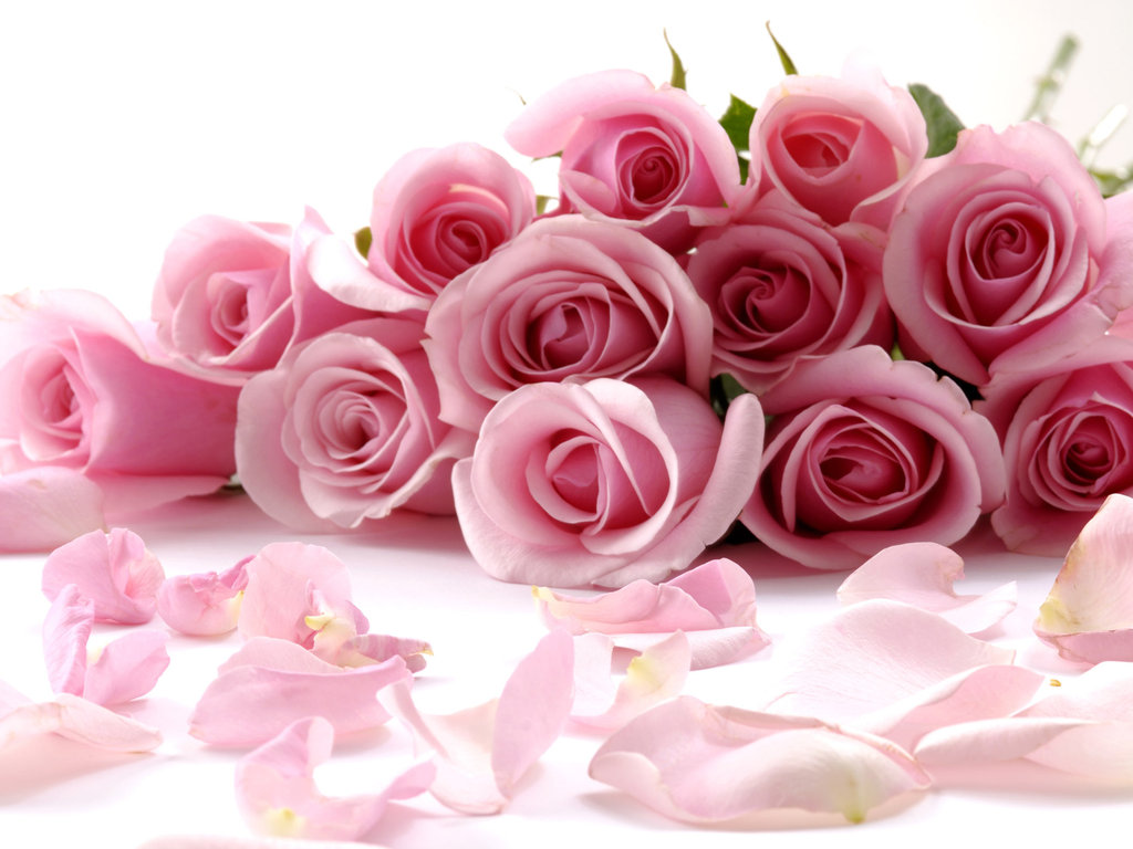 букет розовых роз, скачать фото, обои для рабочего стола