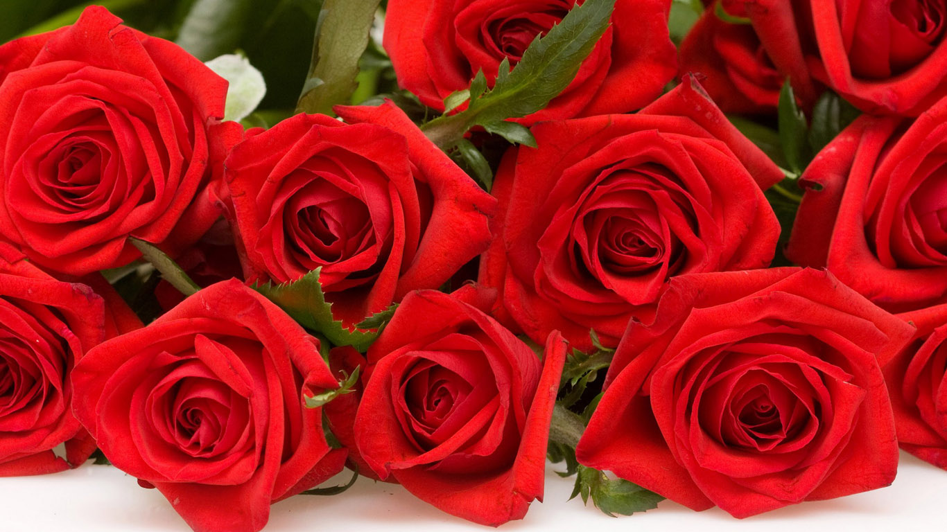 букет алых роз, много красных роз, скачать фото