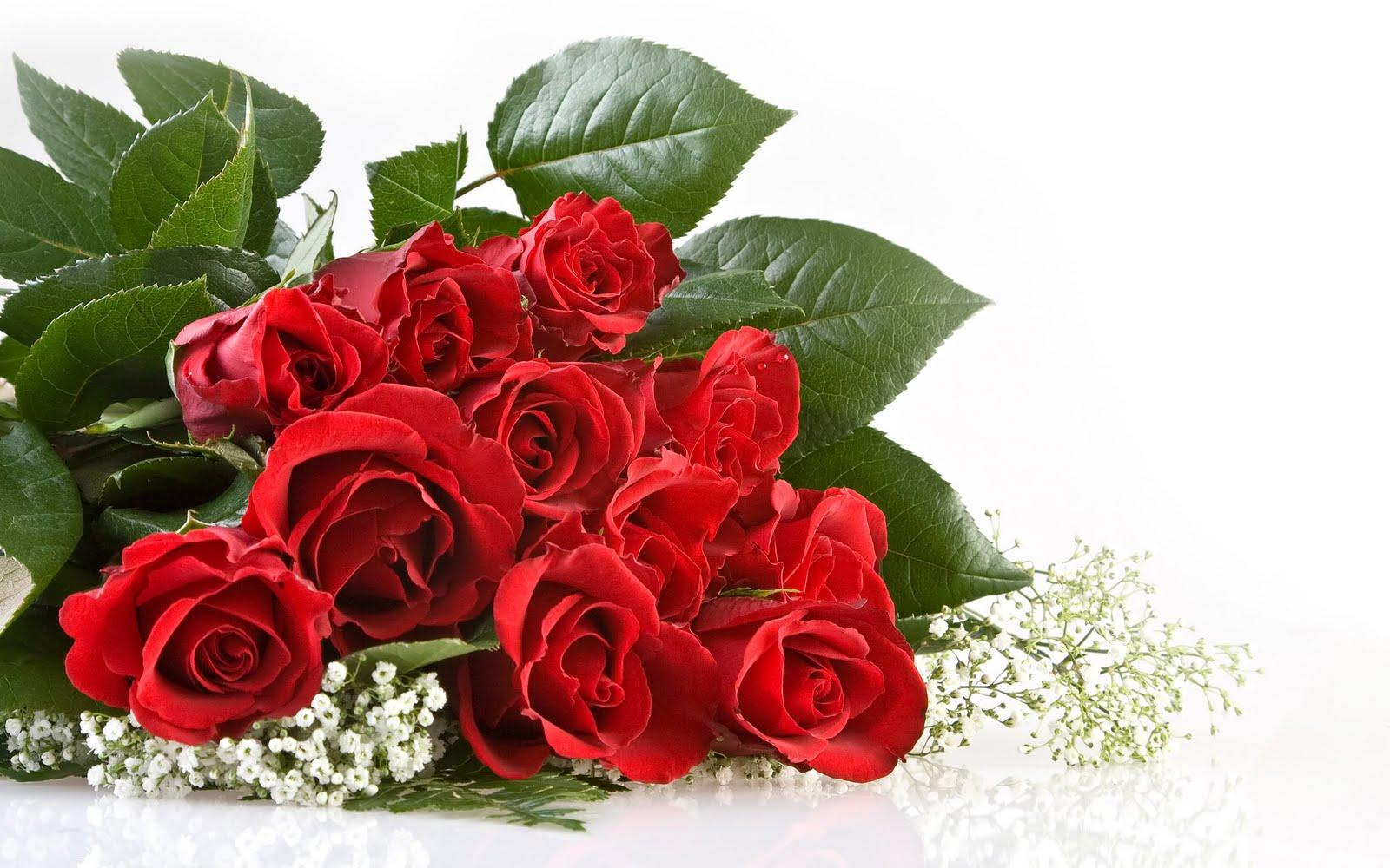букет красных алых роз на белом фоне, скачать фото, обои для рабочего стола