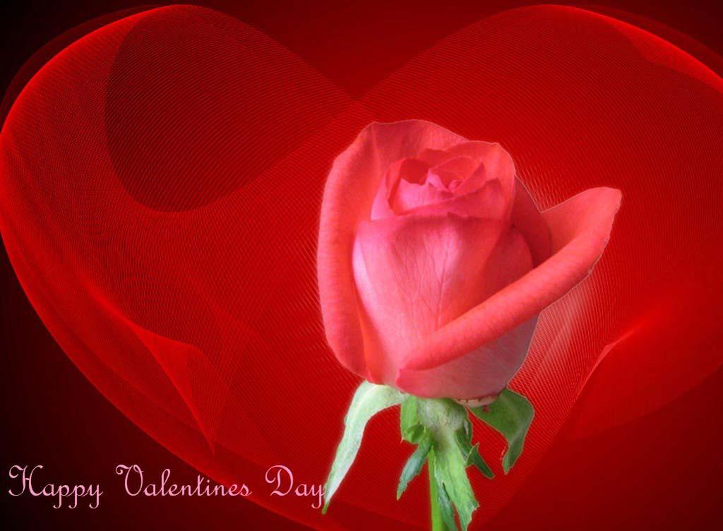 обои на рабочий стол, красная роза, скачать фото, Happy Valentines Day