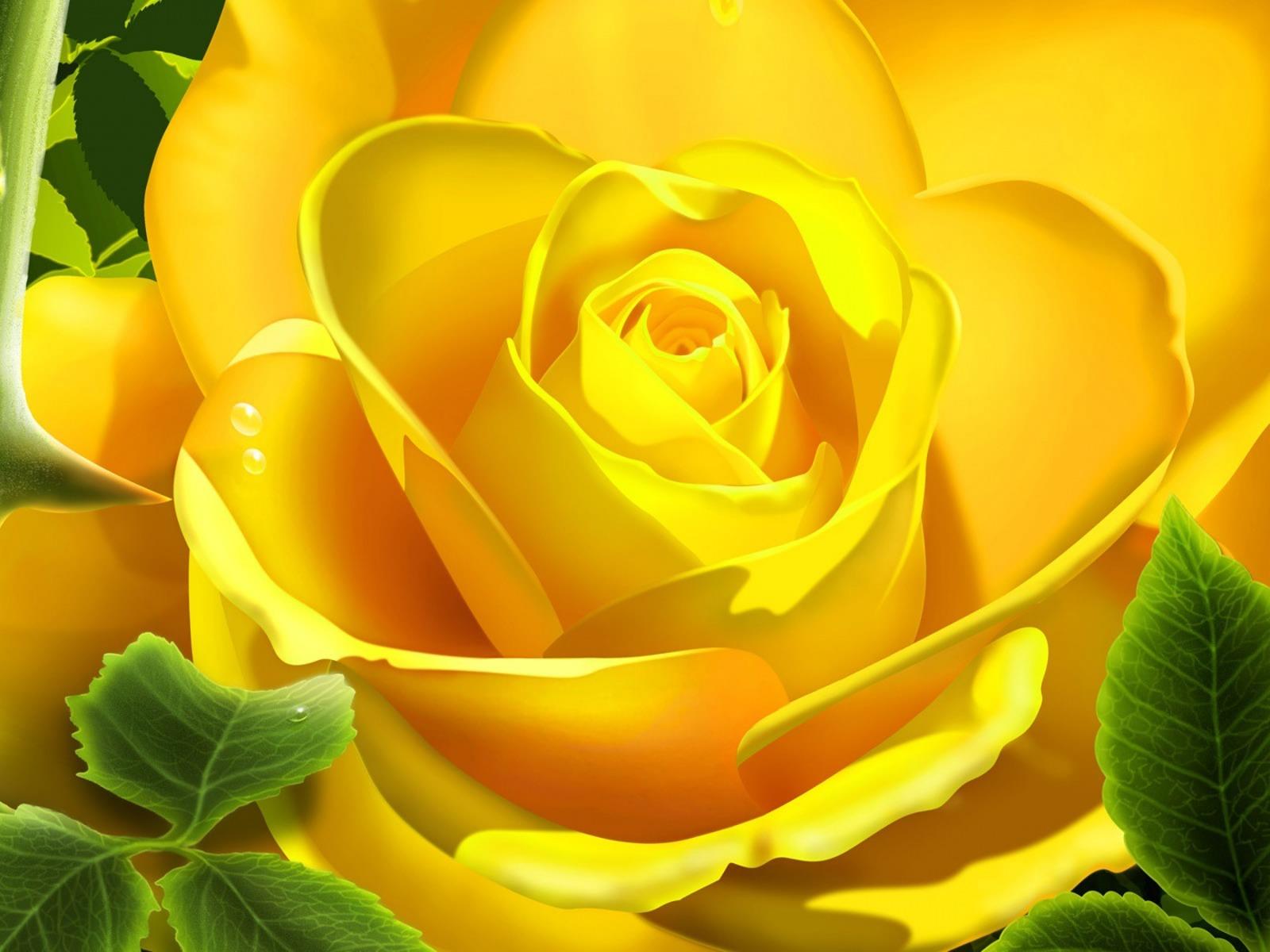 большая желтая роза, красивое фото, скачать обои для рабочего стола