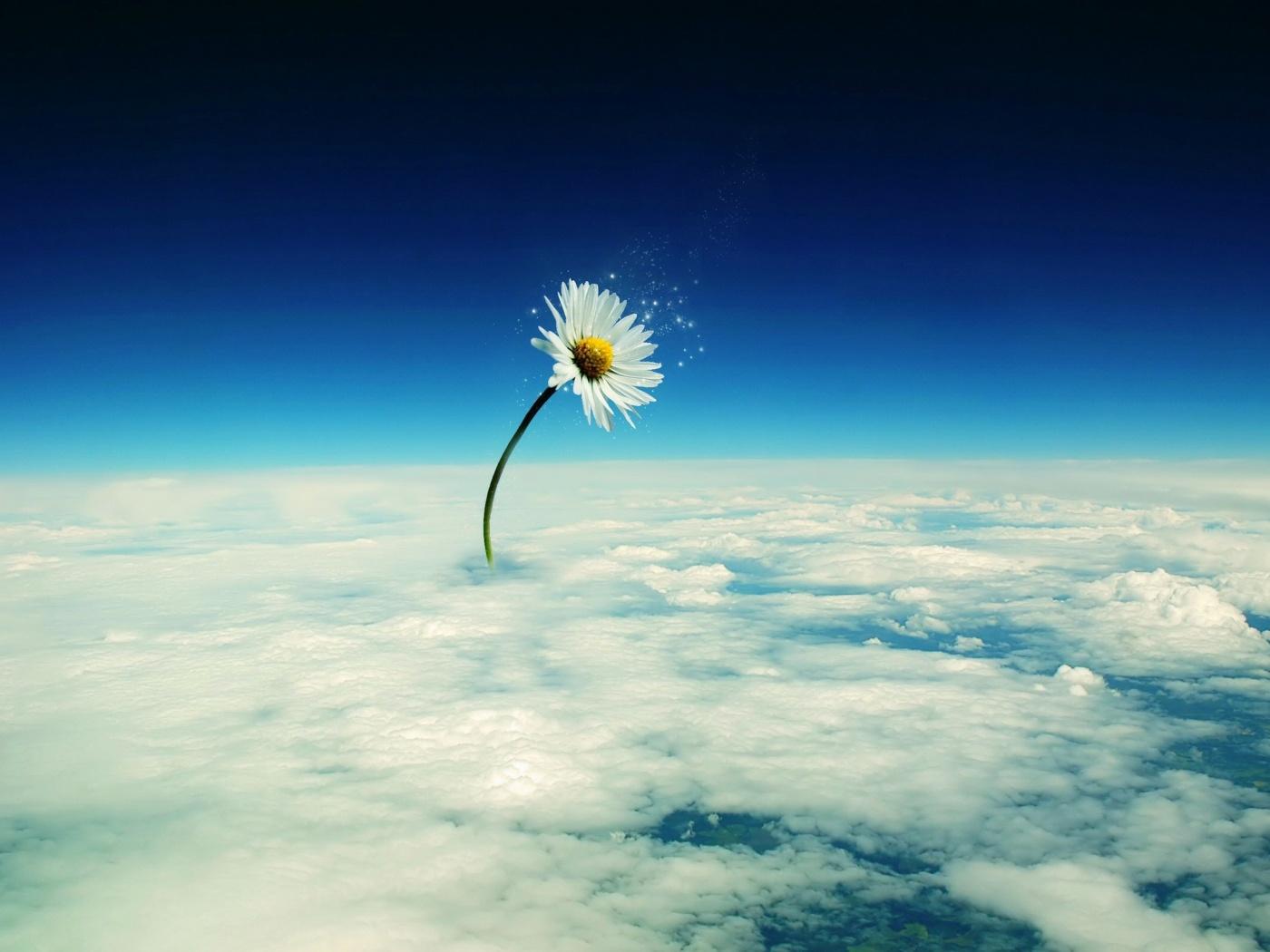 ромашка растет на облаках, скачать фото, обои для рабочего стола